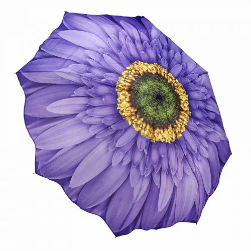 Purple Wisteria Daisy Folding Umbrella